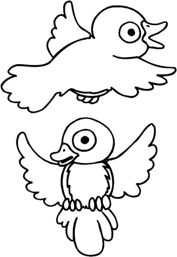 Robin Drawing Robin Bird Coloring Page