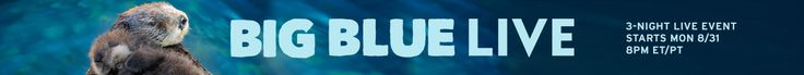 BIGBLUE LIVE - 3 Night Television & Online Event celebrating amazing marine creatures. #August31 - Sept. 2 8pm ET/PT #PBS and #BBCearth  #animalcams #MontereyBay #oceananimals #marinemammals http://www.pbs.org/big-blue-live/home/    pbs.org  #BigBlueLive http://www.pbs.org/big-blue-live/live-cams/