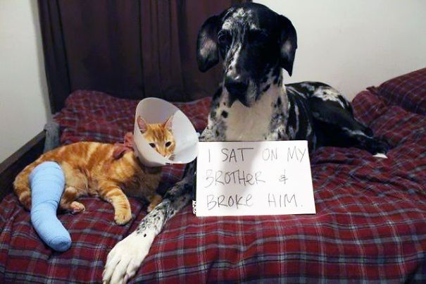 These Pets Are Being Shamed Publicly – 20 Pics