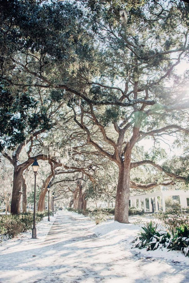 Snow in Forsyth Park in Savannah Georgia. Art pictures photographed by Kristen M. Brown, Samba to the Sea for The Sunset Shop. lowcountry living, lowcountry marsh, lowcountry lifestyle, lowcountry savannah georgia, Savannah Georgia, Savannah GA, snow Savannah GA, snow Savannah Georgia, snow south, snow marsh #forsythpark #savannah #savannahga #visitsavannah
