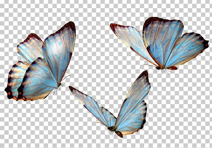 Butterfly Png Butterflies Butterfly Butterfly Girl Butterfly Group Butterfly Wings Butterfly Wing Tattoo Wings Png Overlays Transparent