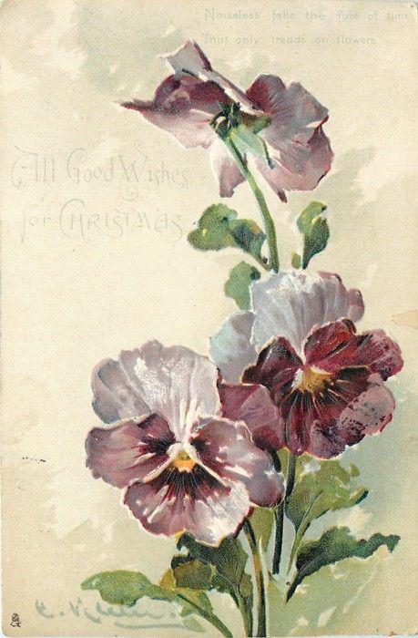 3 light purple pansies by Catherine Klein ~ 1904