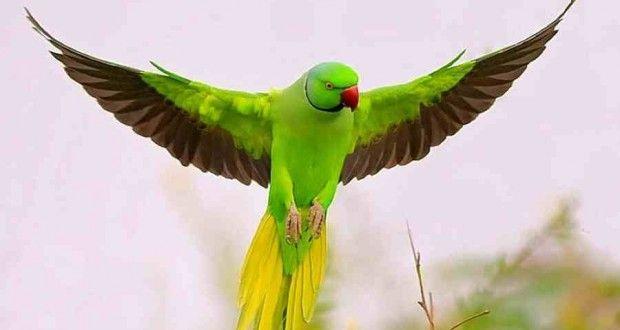 Bedreigde papegaaien in Spanje verkocht