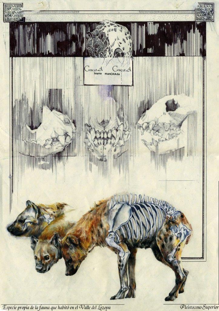 Yolanda González | Pleistoceno Superior, Cave Hyena