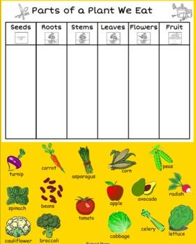 The students or teacher can sort some foods we eat by the part of the plant that they are. This interactive sort is great for teacher modeling or a science center. It is a great introductory piece for students to complete a sort on their own.