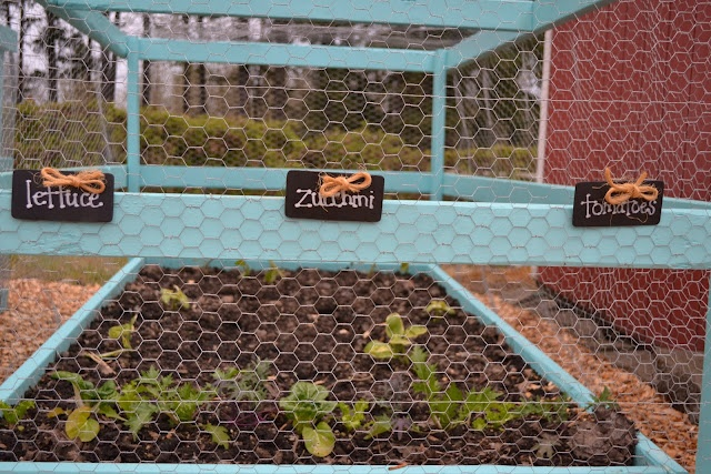 Cute Blog Maybe This Could Work To Keep The Rabbits And Squirrels Out Of My Garden Garden