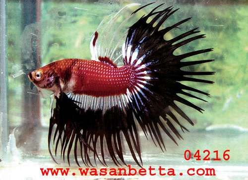 76 best images about how to take care of a betta fish on for How to take care of beta fish