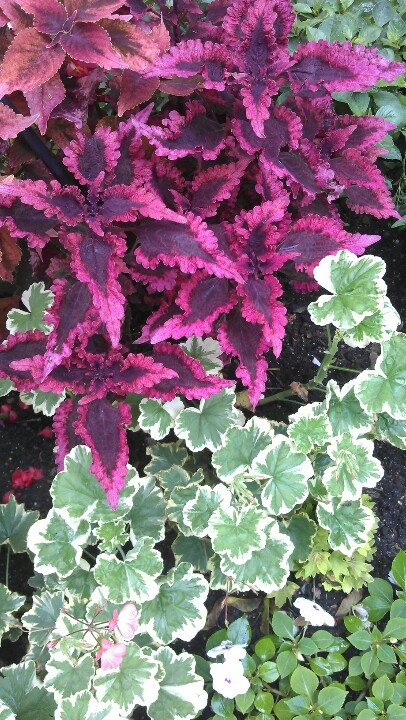 Great contrasting colors in our own personal garden.