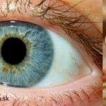 Táto bylinka je jedna z mála, čo dokážu opraviť poškodený zrak