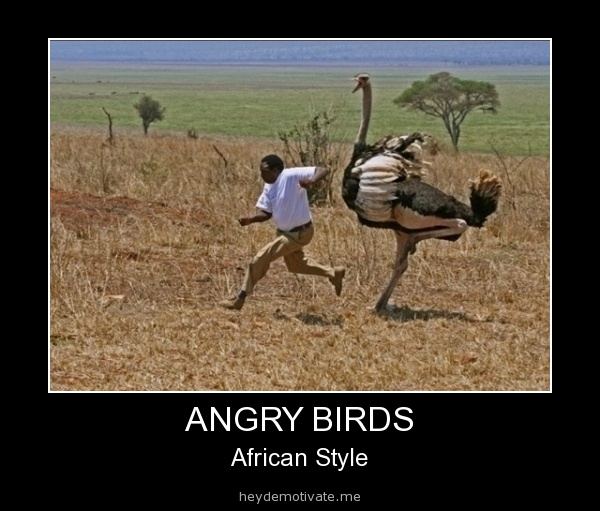 Holy hell, imagine a big ass bird like that chasing you around? hah thank gosh I don't live there