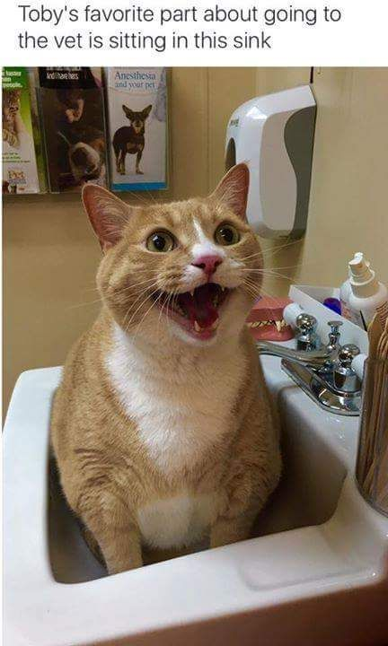 Happy cat. Soo Cute http://ift.tt/2hFlYco