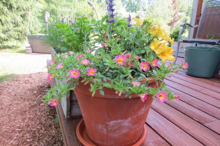 5 secrets to successful container gardening – Garden