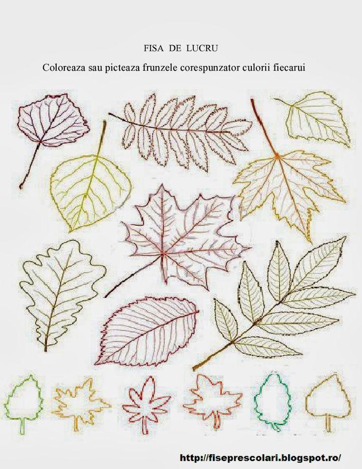 Frunze de toamna de colorat - 20 | Fise de lucru - gradinita