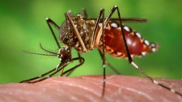 El virus chikungunya, nuevo riesgo para los turistas canadienses