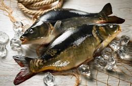 Jest pyszny, ma delikatny smak i świeży rybi zapach – ta właśnie delikatność wyróżnia go wśród innych odmian karpia. Dlatego jest on rybą poszukiwaną, zwłaszcza w okresie Bożego Narodzenia.
