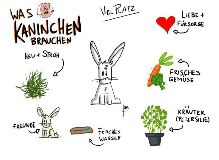 die 25 besten ideen zu kaninchen auf pinterest hase hasenbabies und s er hase. Black Bedroom Furniture Sets. Home Design Ideas