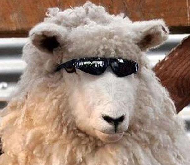 Vocabulario sustantivo 3 oveja: Un animale vive en granja. Tiene mucho pieles.