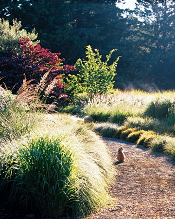 Vanilla or chocolate pudding gardens sun and kitty for Tall grasses for sun