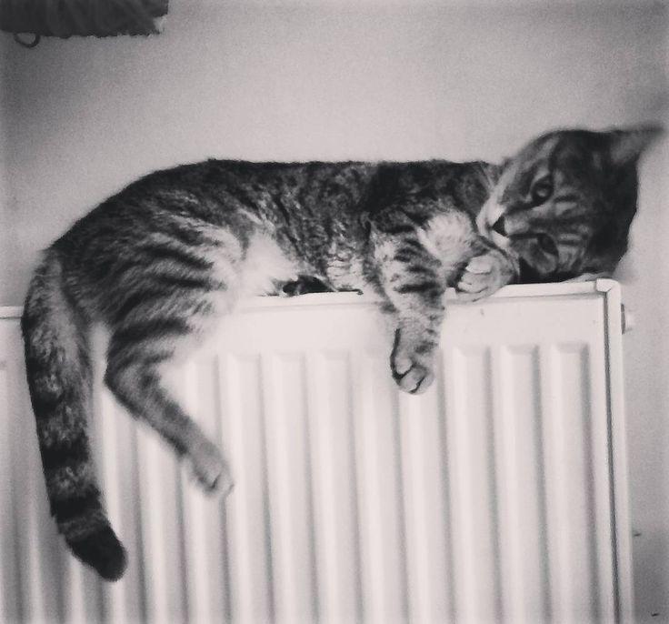 "73 aprecieri, 2 comentarii - Floraria Dorothy's (@florariadorothys) pe Instagram: ""Winter is coming... #catintheflowershop #grigore #clujcats #napocats #catsofcluj #cluj #clujnapoca…"""