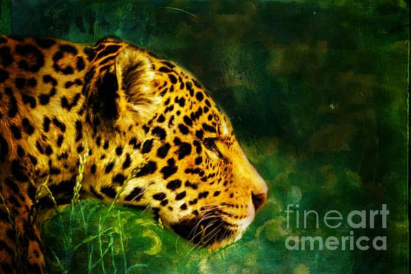 Jaguar in the Grass a digital painting by Tracey Everington of Tracey Lee Art Designs. Available as prints and as merchandise.
