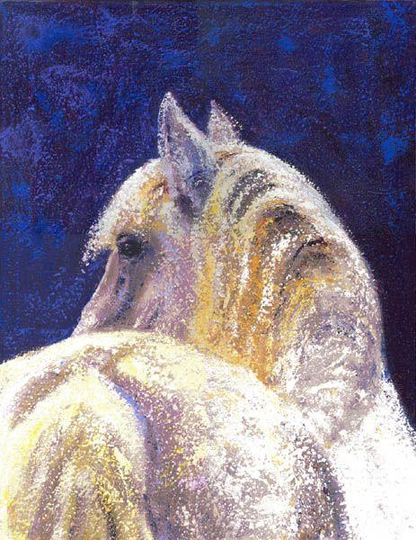 white horse - WetCanvas