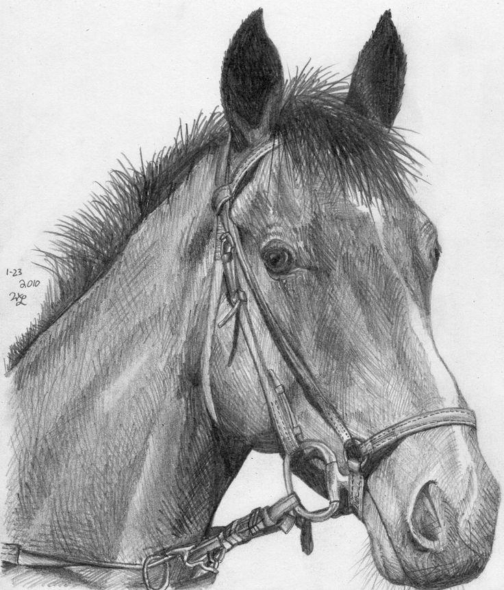 horse sketch | Horse Head Sketch by ~BrickTransformer555 ...