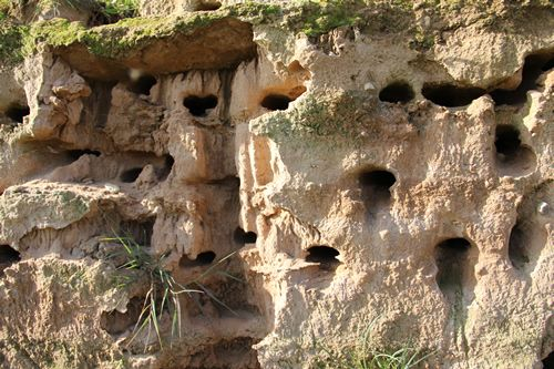 The Sand Martin nests. The artificial sand bank was made by sandinyoureye.