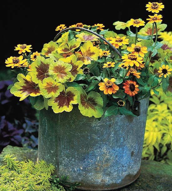 Mix stunning foliage with colorful blooms for a pretty container gardens. See the top annual plant pairings: http://www.bhg.com/gardening/flowers/annuals/annual-plant-pairing-ideas/?socsrc=bhgpin050613mixfoliage=4
