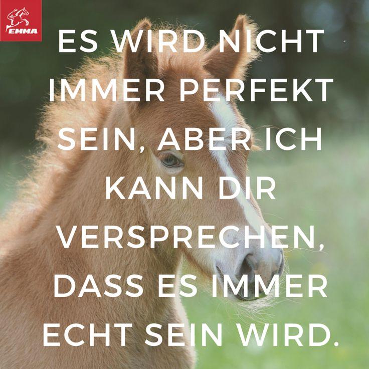 Pferdesprüche & Pferdeshampoo-emma-pferdefuttershop.de