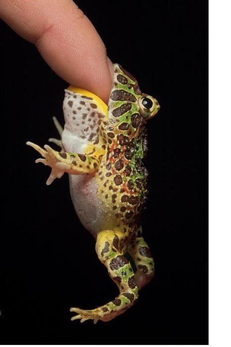 pacman froggg. :)