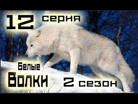 Сериал Белые волки 12 серия 2 сезон (1-14 серия) - Русский сериал HD