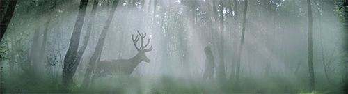 An encounter in the forest.