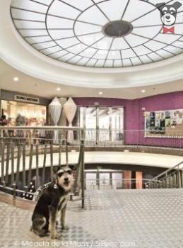 Mercado de Fuencarral | SrPerro.com, la guía para animales urbanos.
