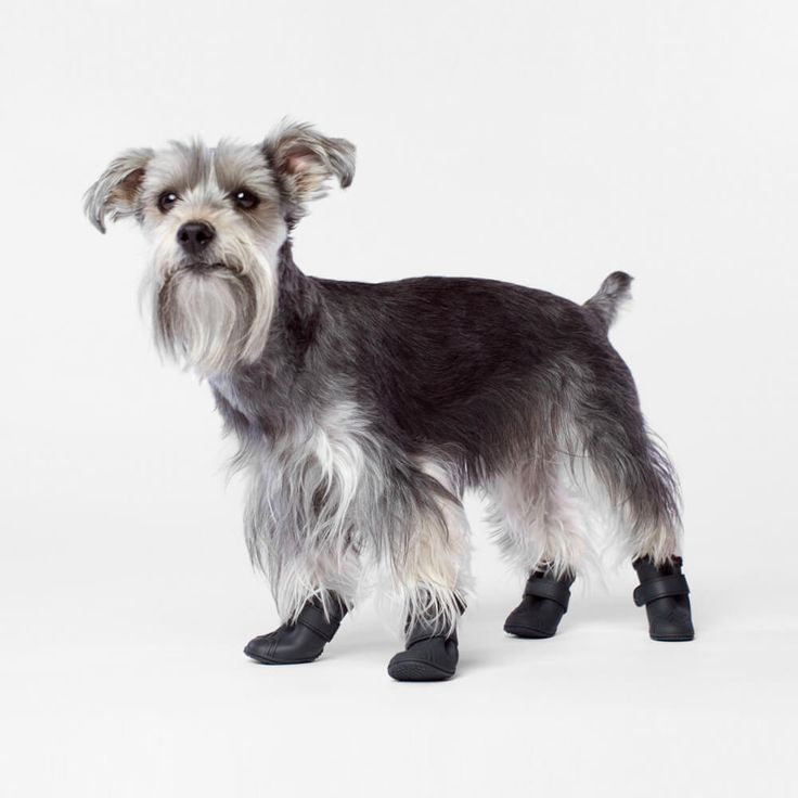 Wellies Dog Boots | Protect your dog's paws from rain, snow, salt and mud with Wellies boots