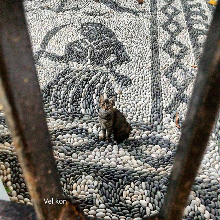 Cats of Spetses - photo by Konstantinos Veliotis