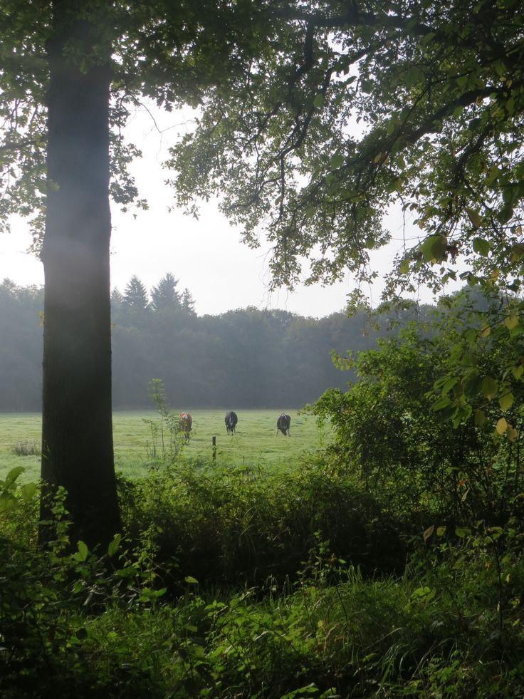 2014-09-28 Mooi doorkijkje naar een weide met koeien
