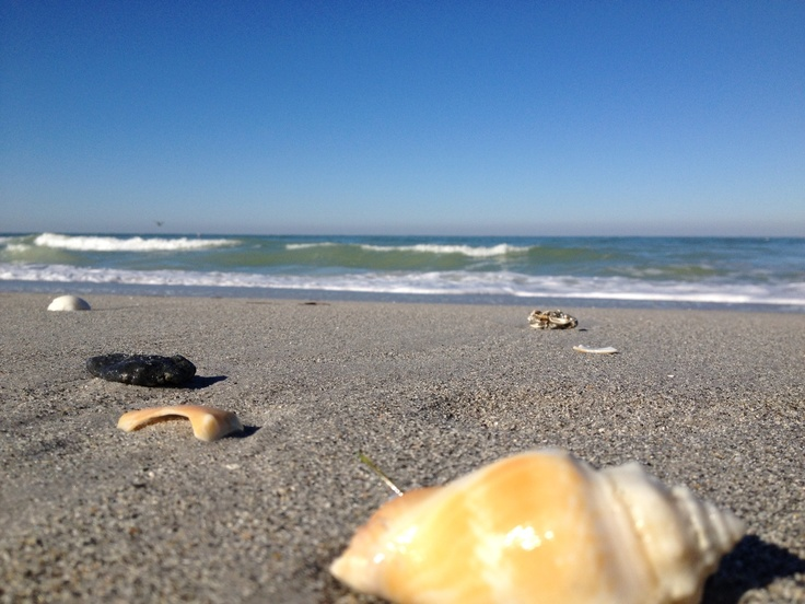 16 best images about indian rocks beach on pinterest for Landscaping rocks pinellas county