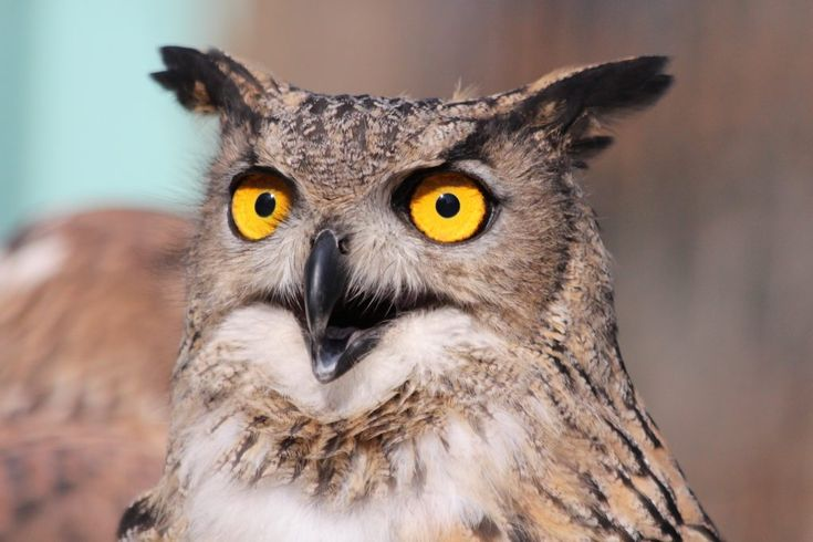 Download this free photo here www.picmelon.com #freestockphoto #freephoto #freebie /// Wondering Owl | picmelon