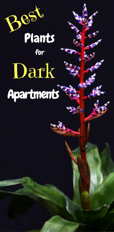 Low Light Interior Plants | Best Indoor Plants for No Sun | Low Maintenance, Easy Indoor Plants |