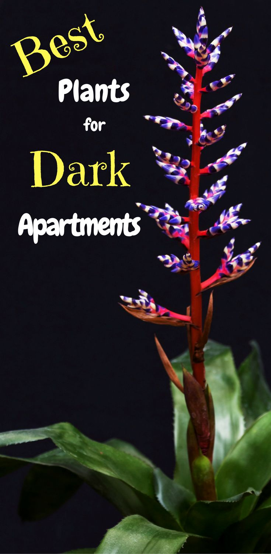 Best 25 interior plants ideas on pinterest house plants for Best no maintenance plants
