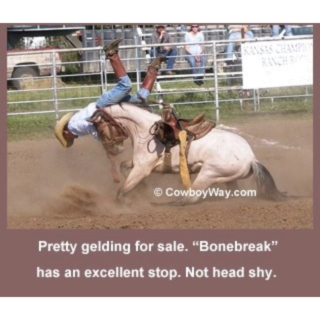 Not the kind of horse sale ad that you should be looking at in person!