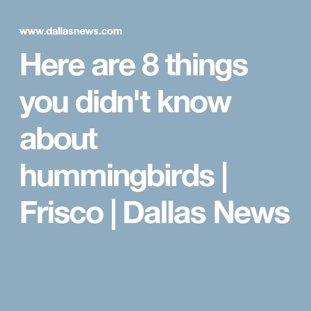 Here are 8 things you didn't know about hummingbirds | Frisco | Dallas News