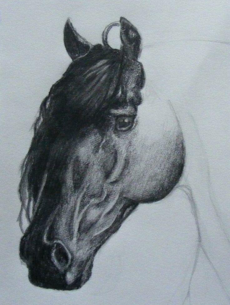 Friesian Head Drawing Friesian Horse Head Drawings