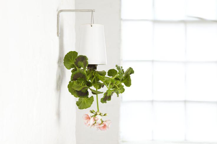 We zagen ze al even voorbij komen in combinatie met de lampen van Plumen op Maison & Objet, maar we laten je graag nog even meer zien van de trend om planten ondersteboven in je interieur op te hangen. De tijd van je planten 'standaard' in een pot of vaas op de tafel of vloer …