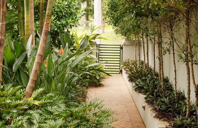 Tropical Garden, Brisbane, Australia