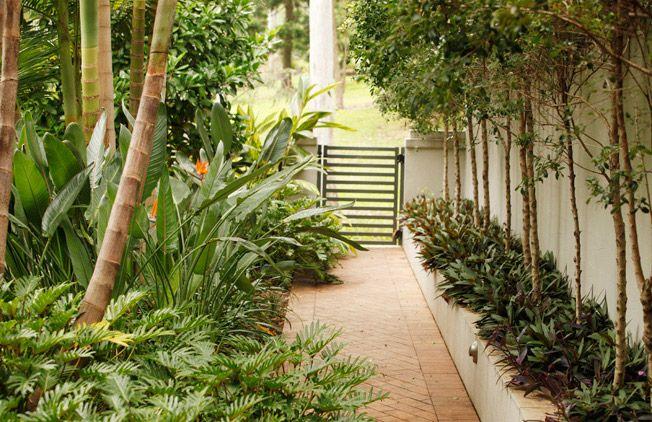 Tropical Garden, Brisbane, AustraliaLandscape Design, Gardens Design