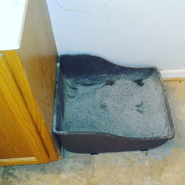 (5/8) Pet Urine Will Drive Away Prospect Like Nothing Else For small areas treat with enzyme based treatments but realize that the only way to completely eliminate the odor the carpet and padding must be removed and replaced. Be ready for the request to either change the carpet or provide a carpet allowance. It's also best to not have pets present when potential buyers are going through the home. . Tag someone you know who is selling (or planning to sell) their home so they stay informed and…