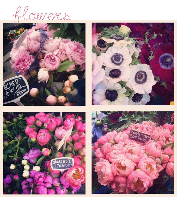 The Most Beautiful Peony Flowers Instagram Peony