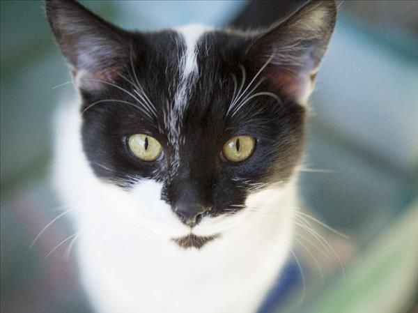 Hey there, I'm Zorro from Noosa. I'm a sweet and loving boy who loves to cuddle up next to you and hear about your day. Come see me today! http://bit.ly/2scCeo7