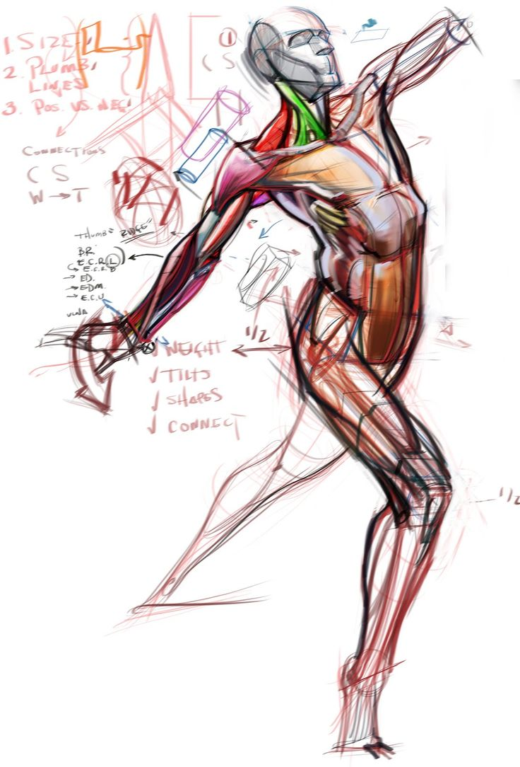 22 best Torso anatomy images on Pinterest | Anatomy reference, Human ...